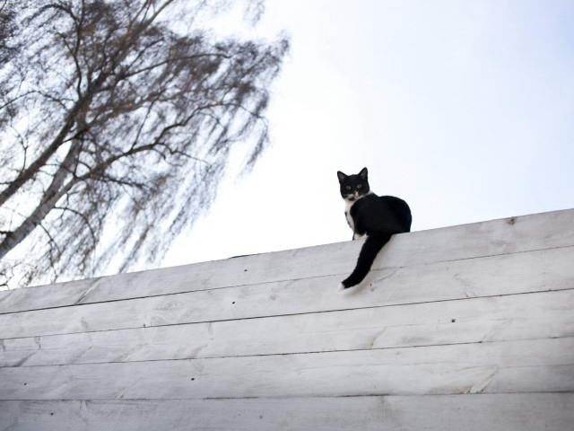 Kotek na dachu :)